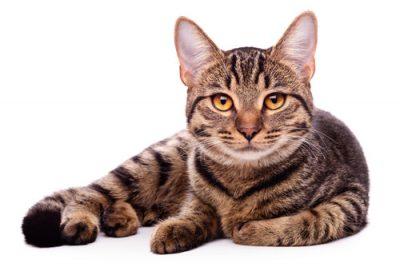 gato - su sistema digestivo