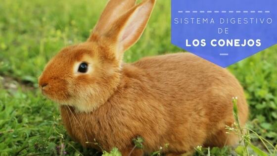 sistema digestivo de los conejos