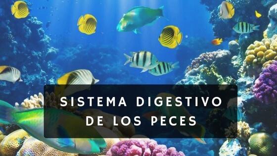 sisttema digestivo de los peces