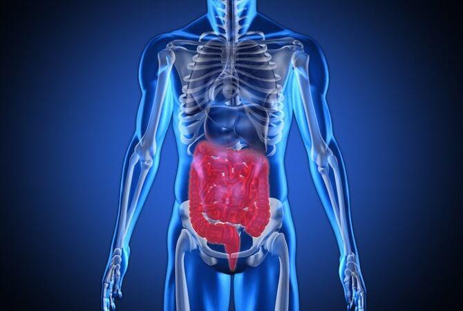 Sistema digestivo - Toda la información sobre el aparato digestivo ...