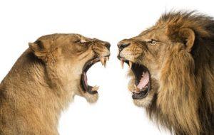 partes del aparato digestivo de los leones