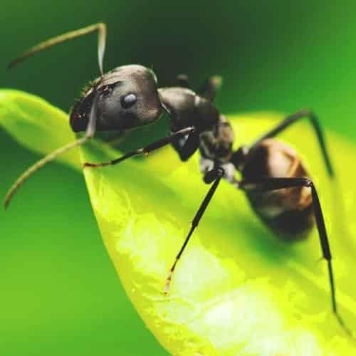 sistema digestivo de los insectos